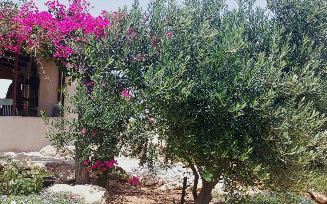 Ödes Land ist wieder fruchtbar: Vogelgezwitscher in Mitzpe Yair